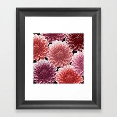 DAHLIAS (flowers collection) Framed Art Print