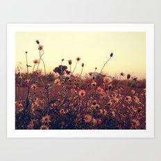 Desert Dandelion Art Print
