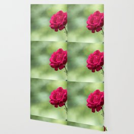 Wild red rose on green blurry background Wallpaper
