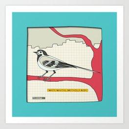 White Wagtail Art Print