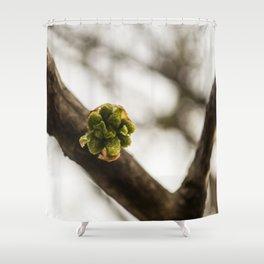 ginkgo biloba leaf bud Shower Curtain