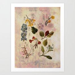 Botanical Study #1, Vintage Botanical Illustration Collage Art Print