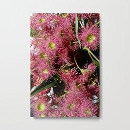 Gumtree Flower Metal Print