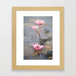 Three Lotus Flowers Framed Art Print