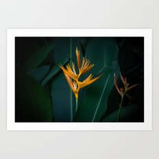 Orchids yellow Art Print