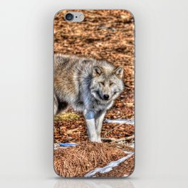 Arctic Wolf and Pine Tundra iPhone Skin