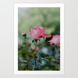 Rose by any other name... Art Print