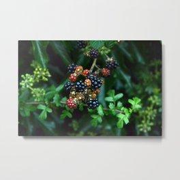 blackberries in red and black Metal Print