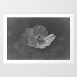 Expired Poppy Art Print