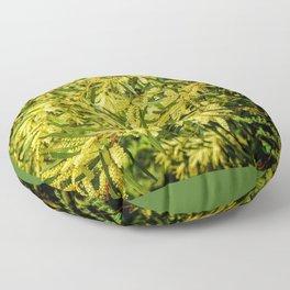 Wattle - Australian Acacia Floor Pillow