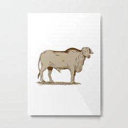 Brahman Bull Drawing Metal Print