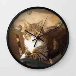 Cute cat relaxing in the sun on old bench Wall Clock