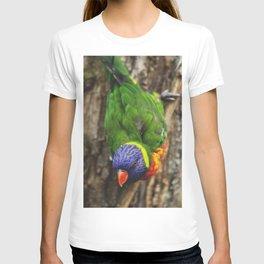 Lorikeet T-shirt