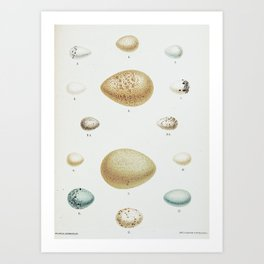 Special Delivery: Antique Egg Print Art Print