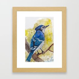 Arrogant Blue Jay Framed Art Print