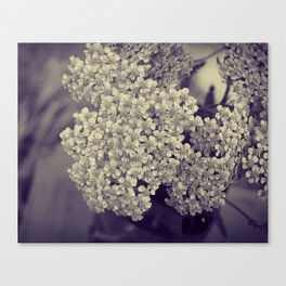 Nature in Black and White -- Botanical Still Life -- Yarrow Flowers Canvas Print