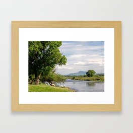 Grazing by the River Lune Framed Art Print