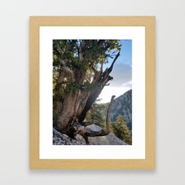 Ancient Bristlecone Pine Forest #3 Framed Art Print