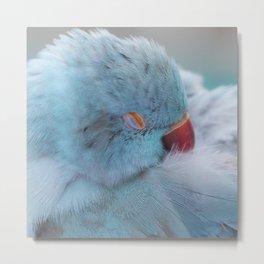 Sleeping Bird Metal Print