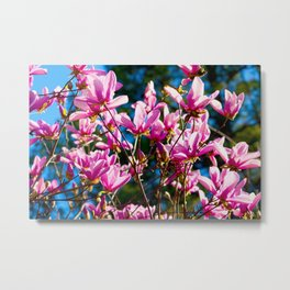 Pink Flowers In The Sun Metal Print