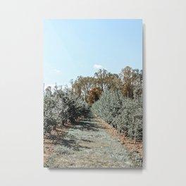 Apple Fields Metal Print