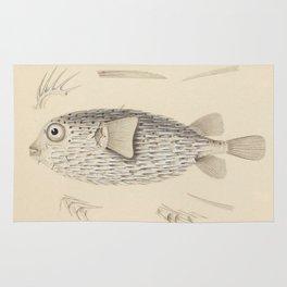 Naturalist Pufferfish Rug