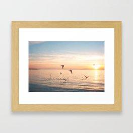 Flying Low Framed Art Print