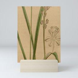 Scilla scilloides Mini Art Print