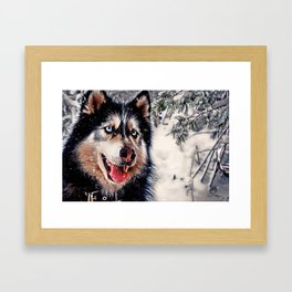Playful Husky Framed Art Print