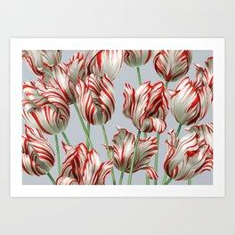 Semper Augustus Tulips Art Print