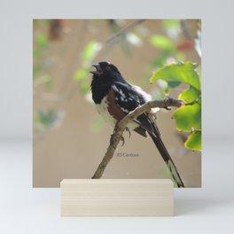 Spotted Towhee Scopes the Oak Grove Mini Art Print