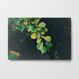 Surrond yourself with nature Metal Print