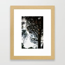 Sunset on a tree Framed Art Print