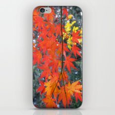 November maple iPhone & iPod Skin