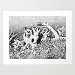 Transitions in nature part 3 Art Print