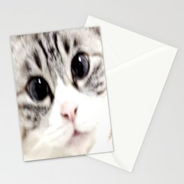 My name is chill of pink nose and blue eyes. I Love Cat. (Normal) Stationery Cards
