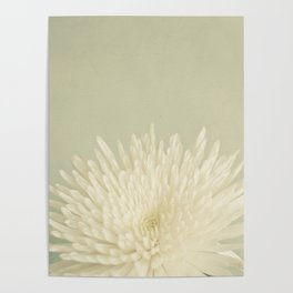 Pale Beauty Poster