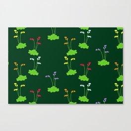 Floral sundews Canvas Print