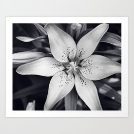 Black And White Lily Flower Photography Grey Floral Art Lillies Photo Lilly