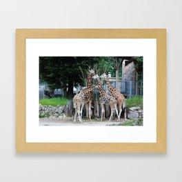 Animal Planet Framed Art Print
