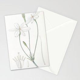 Flower 1555 milla biflora Snow white Milla16 Stationery Cards