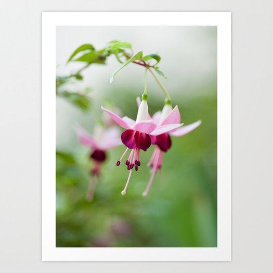 Fuchsia  8686 Art Print