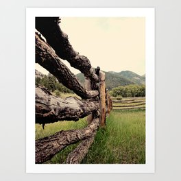 Colorado, fence, color Art Print