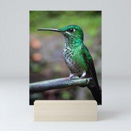 Green-crowned brilliant hummingbird Mini Art Print