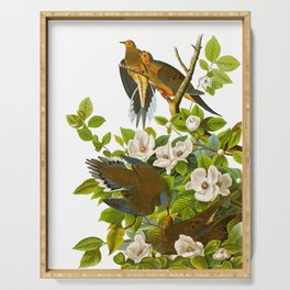 Carolina Pigeon John James Audubon Birds Vintage Scientific Illustration Serving Tray