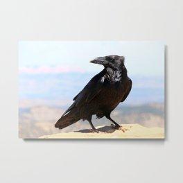 Bryce Canyon Raven Metal Print