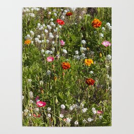 Field of Wild Flowers Poster
