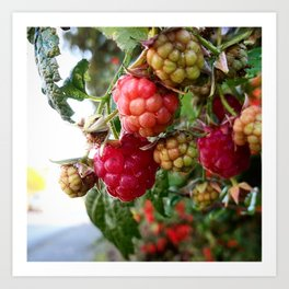 Raspberries Young Art Print