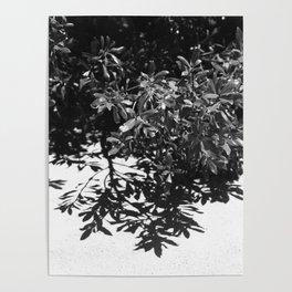 Malibu At Noon Poster