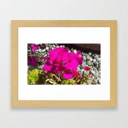 Flower bed Framed Art Print